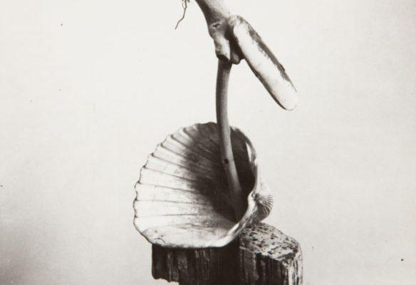 """El Museo Oteiza Exhibe La Muestra """"Mutación Poética. Naturaleza Viva En Los Objetos De Ángel Ferrant, 1945-1950"""""""